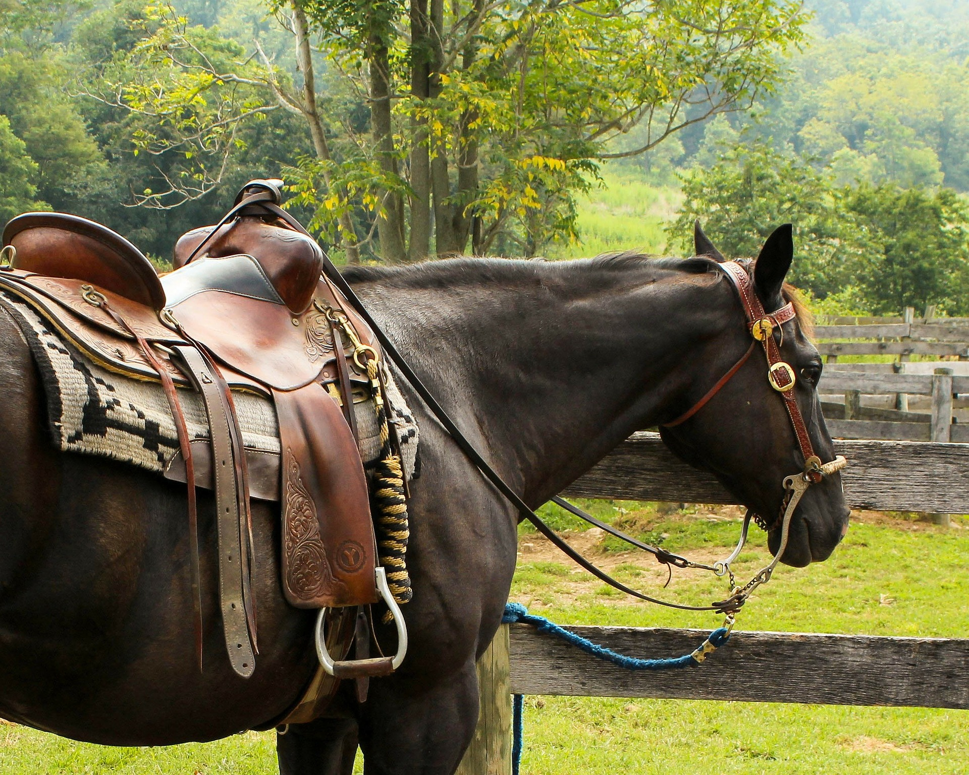 Double S Saddlery – Hand Crafted Western Waddles